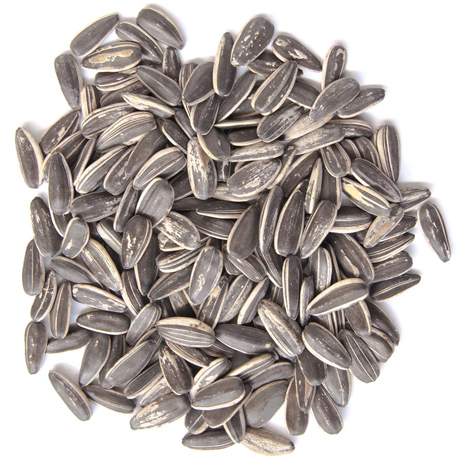 Graines de tournesol - Sunflower seeds