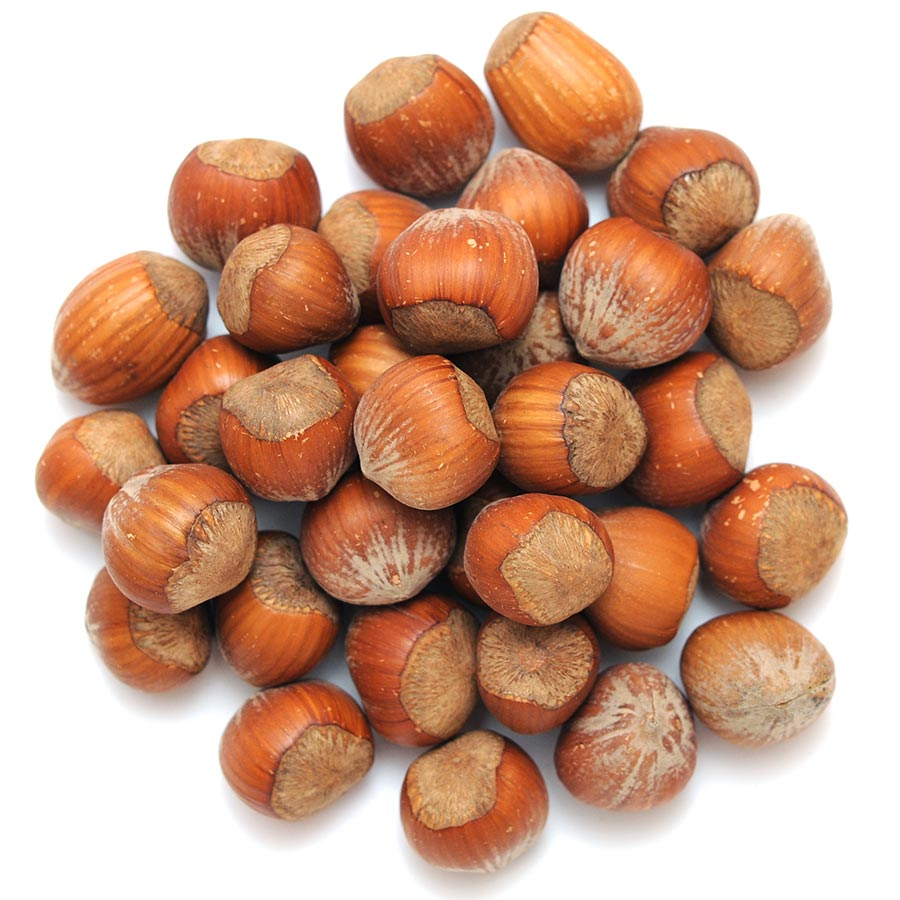 Noisettes - Hazelnuts